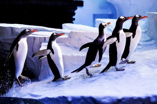 Океанариум Дип Англия. Океаны в миниатюре. Самые известные и крутые океанариумы мира. Фото с сайта NewPix.ru