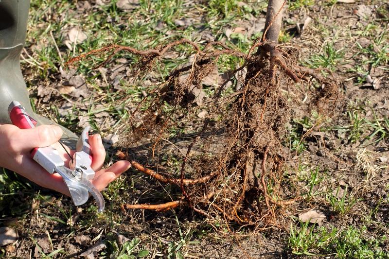 когда сажать овощи на рассаду 2019