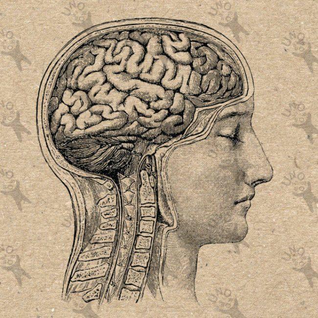Метаболическая память: Наш метаболизм все помнит!