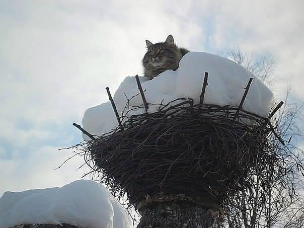 Славный кот и его «Дверь в лето»