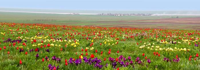 Казахстан Степь Родная