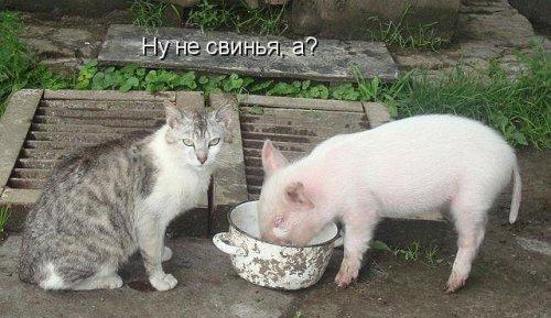 """""""Жми на картинку и ты похудеешь))))"""