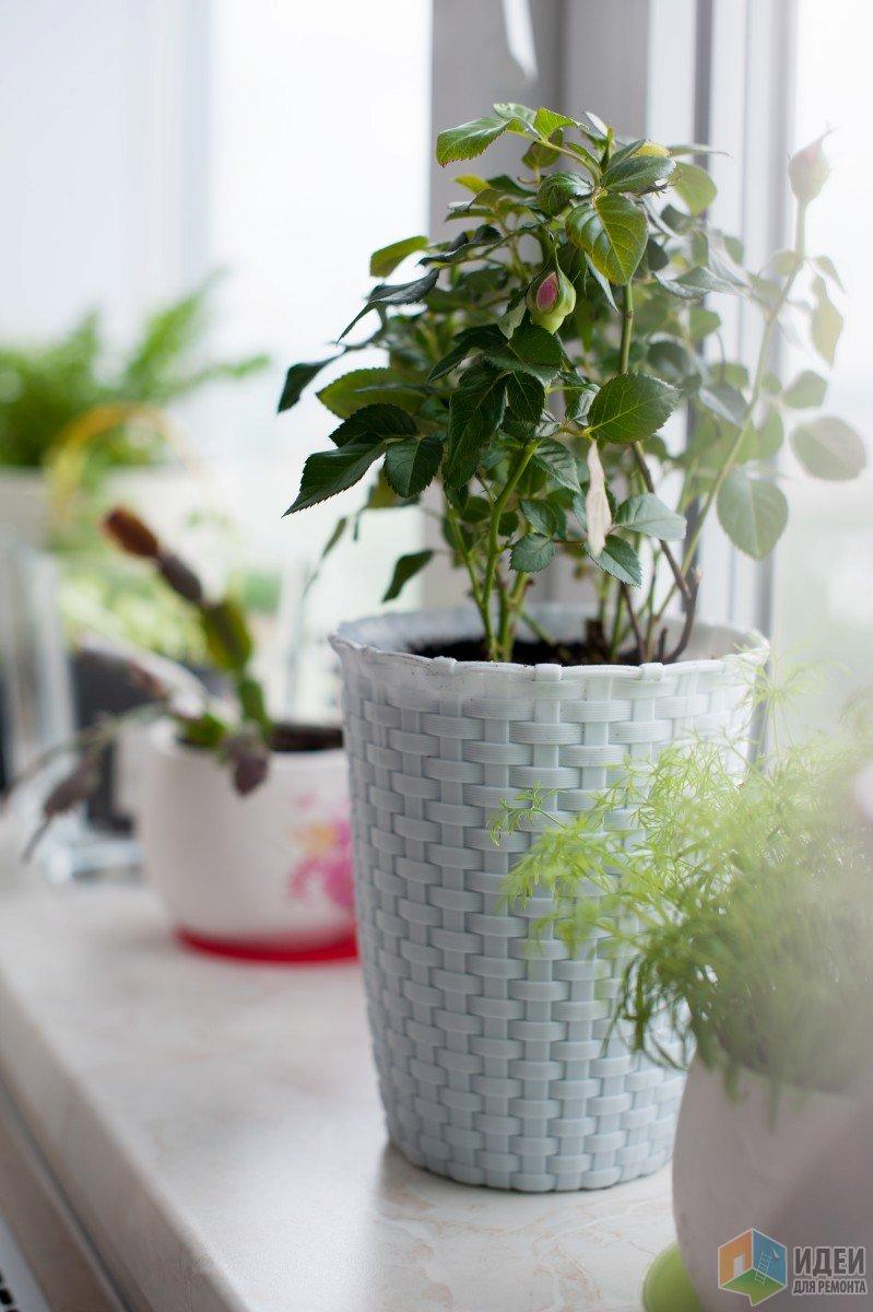 Очень сильно люблю цветы и зелень. Они у меня повсюду. :)