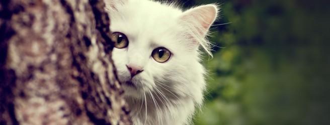 Кот за деревом