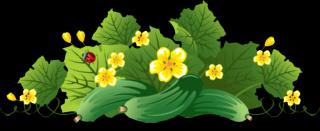 ogur46 (Копировать) (320x131, 54Kb
