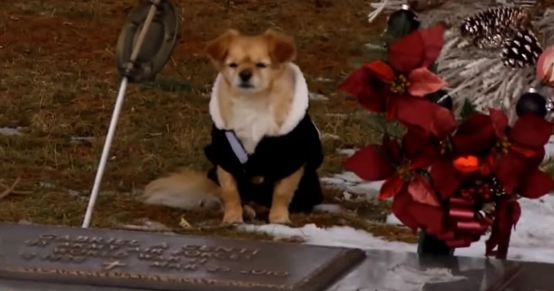 Собака не хотела отходить от этой бетонной плиты. Причина — трогательна до слез!