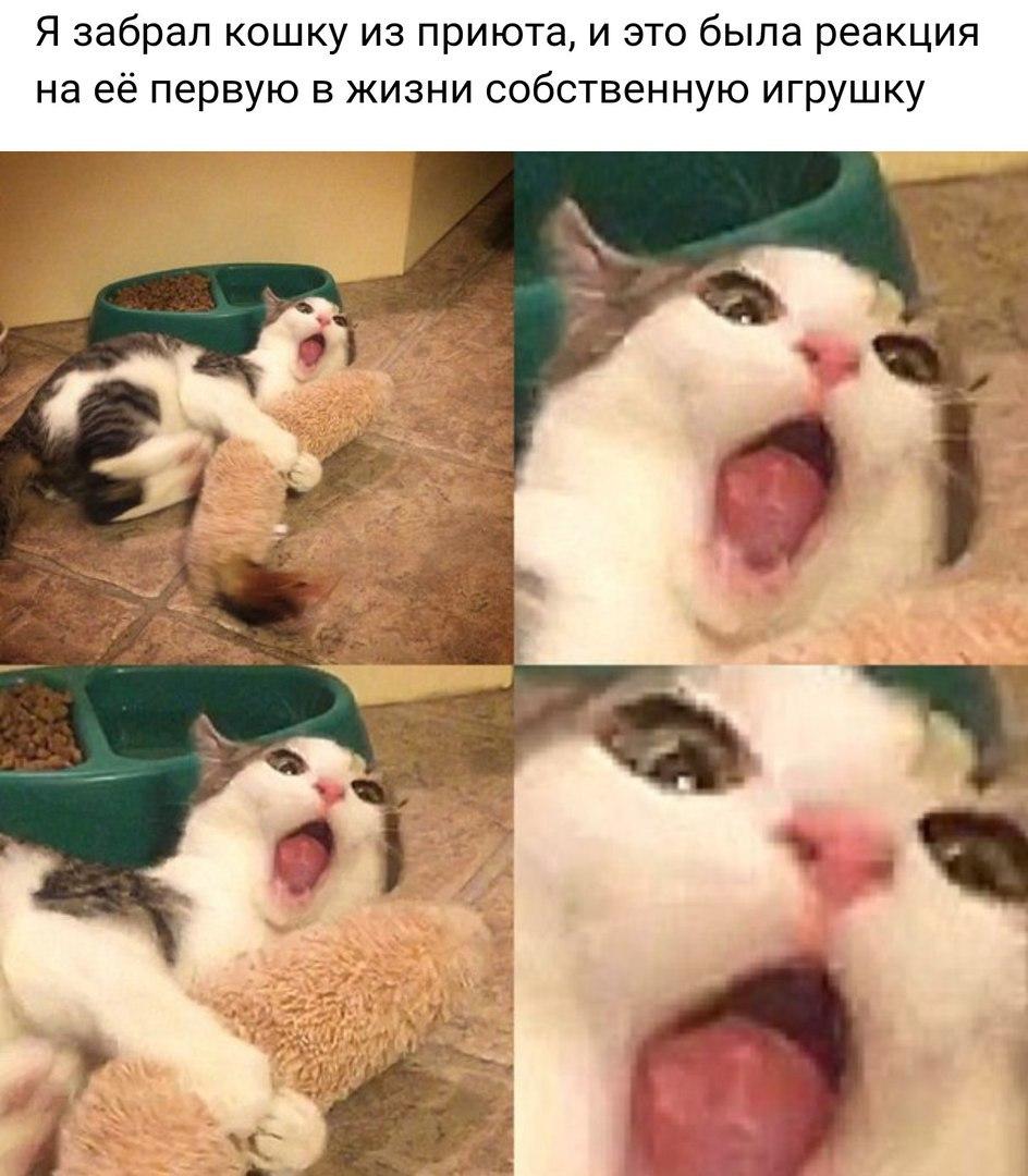 Кошка и ее реакция