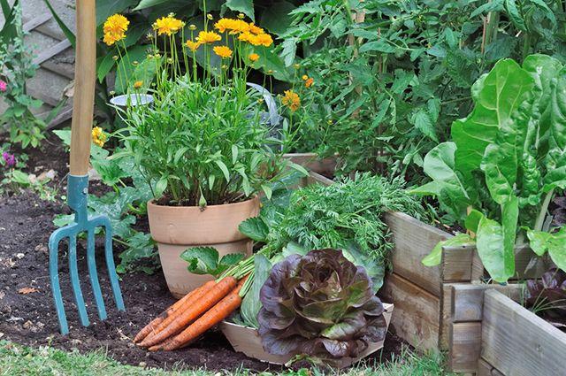 Сажаем растения в огороде 140