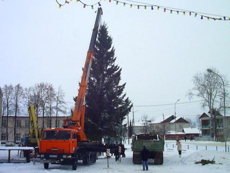 Полиция проверяет тюменских чиновников, срубивших елку во дворе у пенсионерки