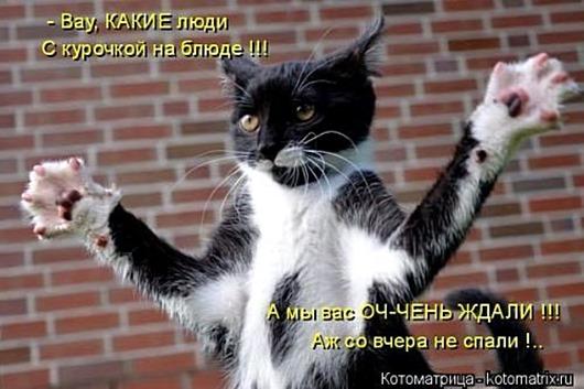 1488563540_kotomatrica-23