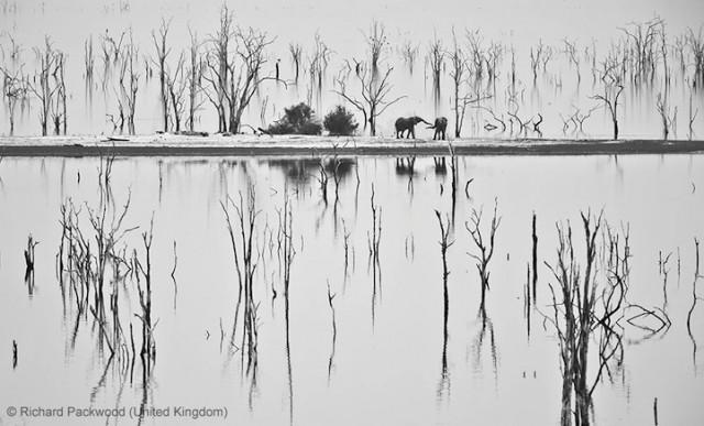 Забавные фото победителей конкурса Wildlife Photographer of the Year (11)