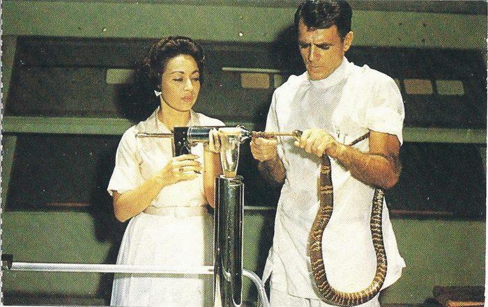 Американский ученый-долгожитель перенес 170 укусов змей и умер в 100 лет от старости