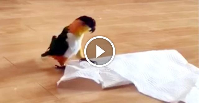 Попугай и бумажное полотенце