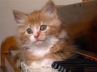 Кошки и Котята 75