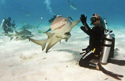 Фотографии, сделанные в нужный момент.  Позитивные, зверские и рыбные