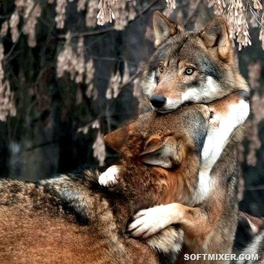 Такая зверская любовь…