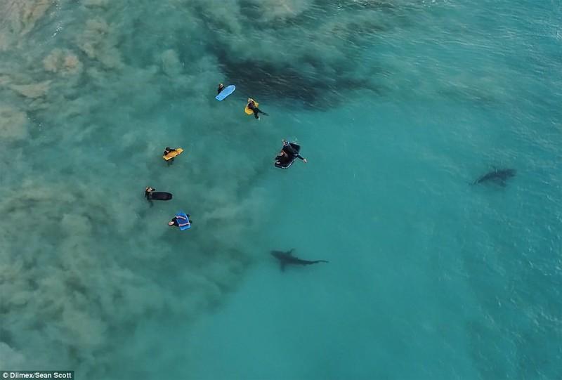 К беззаботным школьникам под водой подплыли 4 сотни хищных акул