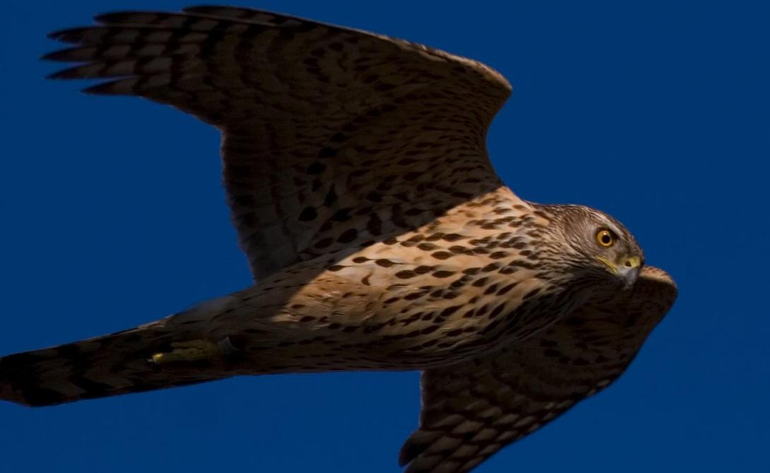 Самые опасные птицы: их лучше обходить стороной