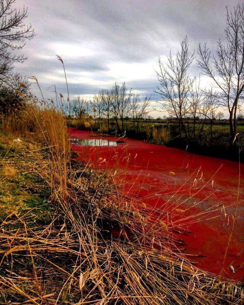 «И польются красные реки после выборов» Библия. Исход, глава 7, история, стих 19., факты