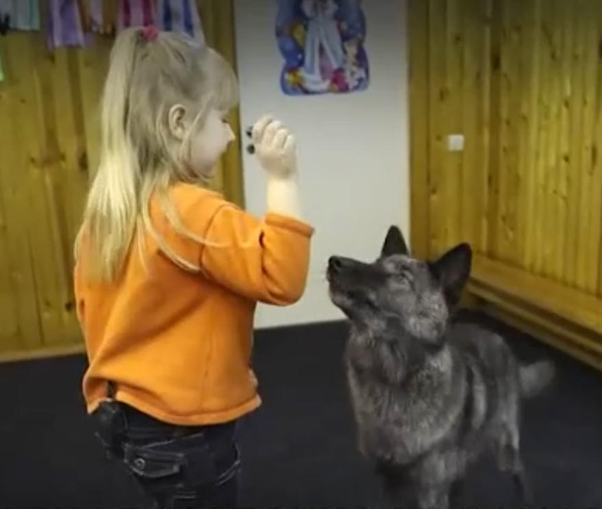 В Самаре семилетняя девочка живёт под одной крышей с волком