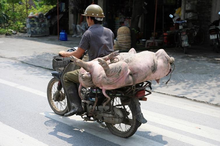 10 удивительных фактов о вьетнамцах, которые помогут узнать о них немного больше