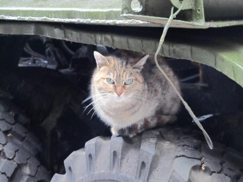 Под крышей. бронетехника, животные, коты