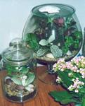 Сад в бутылке своими руками: мини-оранжерея