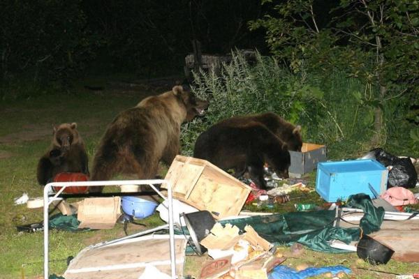 Встречи с медведем: рассказы очевидцев