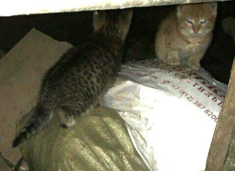 Два маленьких комочка счастья очень нуждаются в помощи!