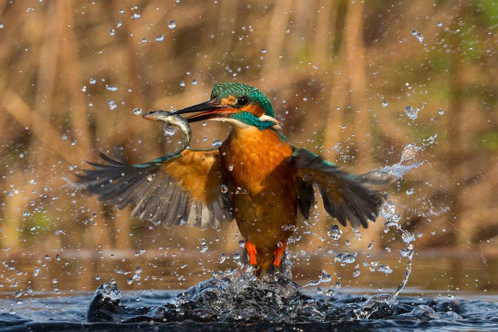 Это обязательно стоит увидеть — лучшие фотографии животного мира за этот месяц