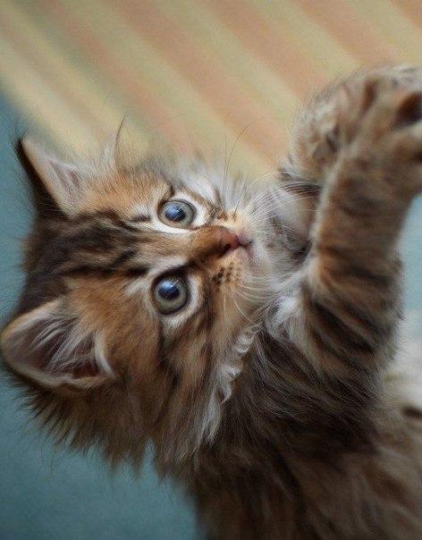 О котятах