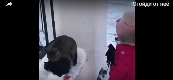 Ревнивая девочка познакомилась с мартовскими котами. И ей это не понравилось