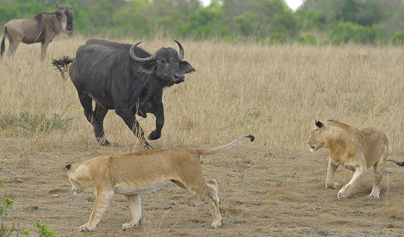10 самых смертоносных животных в мире