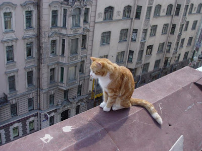 Бездомный кот по кличке Сердце