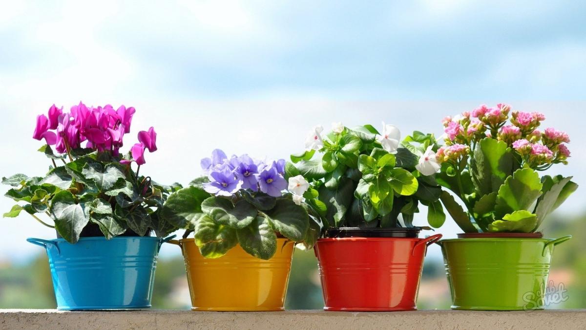 Как перевозить растения на дальние растояния