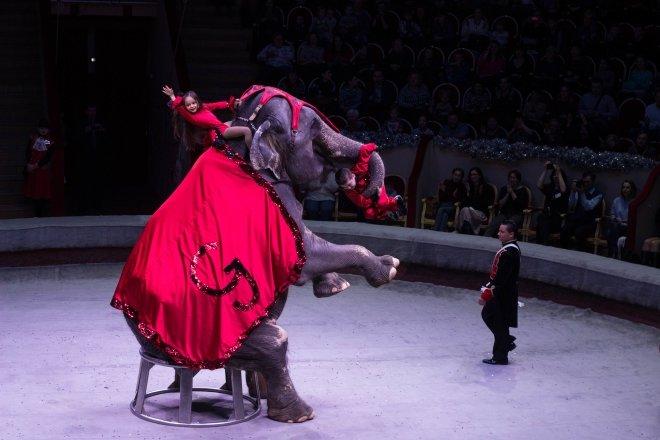 Несовершеннолетним могут запретить посещать цирки в России
