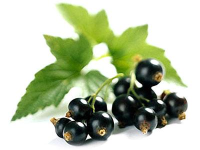 Ученые признали самую полезную ягоду