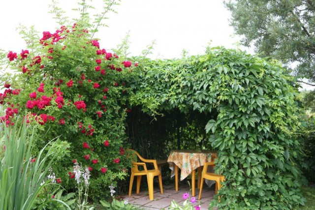Как сделать беседку из живых деревьев и роз
