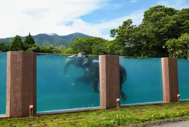 Бассейн для слонов в сафари-парке, Япония доброта, животные, мир