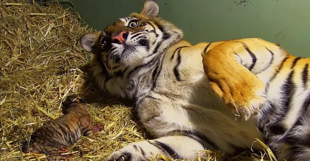 Свидетелями маленьких чудес могут стать и обычные работники зоопарка