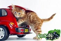 Кошки и Котята 64