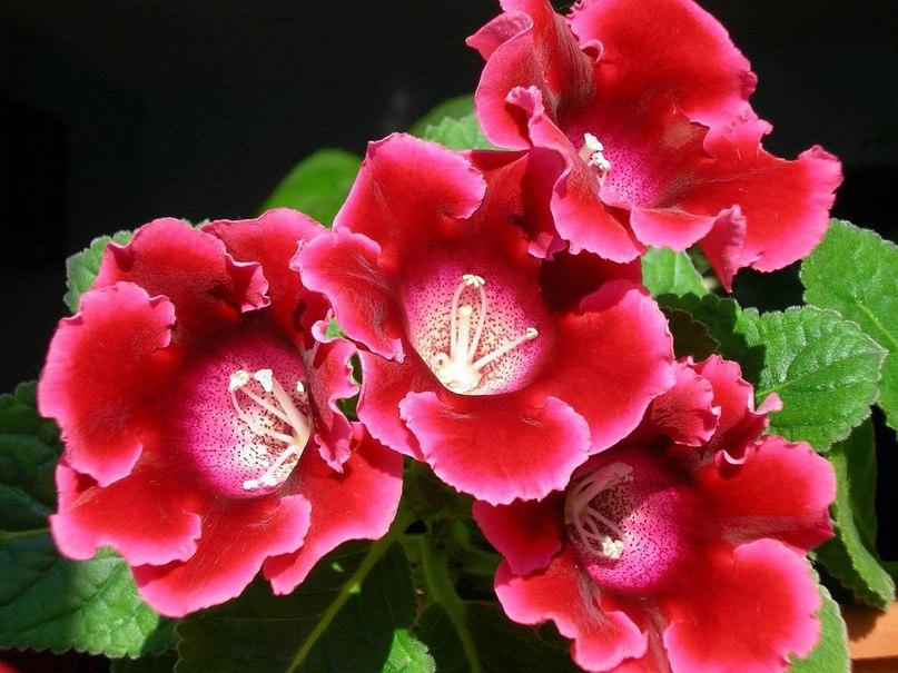 Комнатныe цвeты: польза и врeд