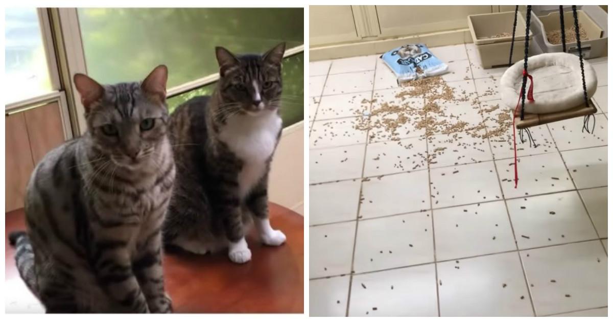 Кот без зазрения совести сдал своего соседа