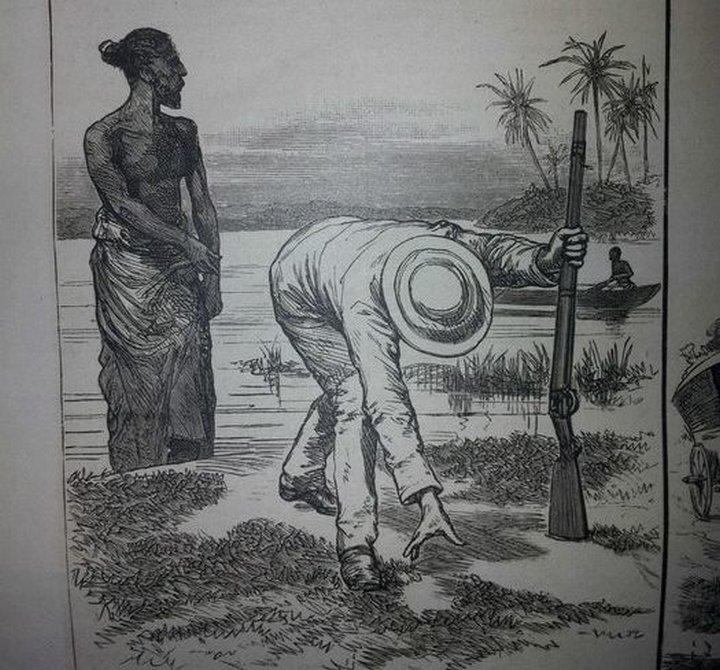Как охотились на крокодилов в позапрошлом веке