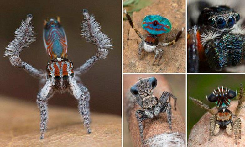 Как выглядит и где живёт, возможно, самый красивый паук в мире
