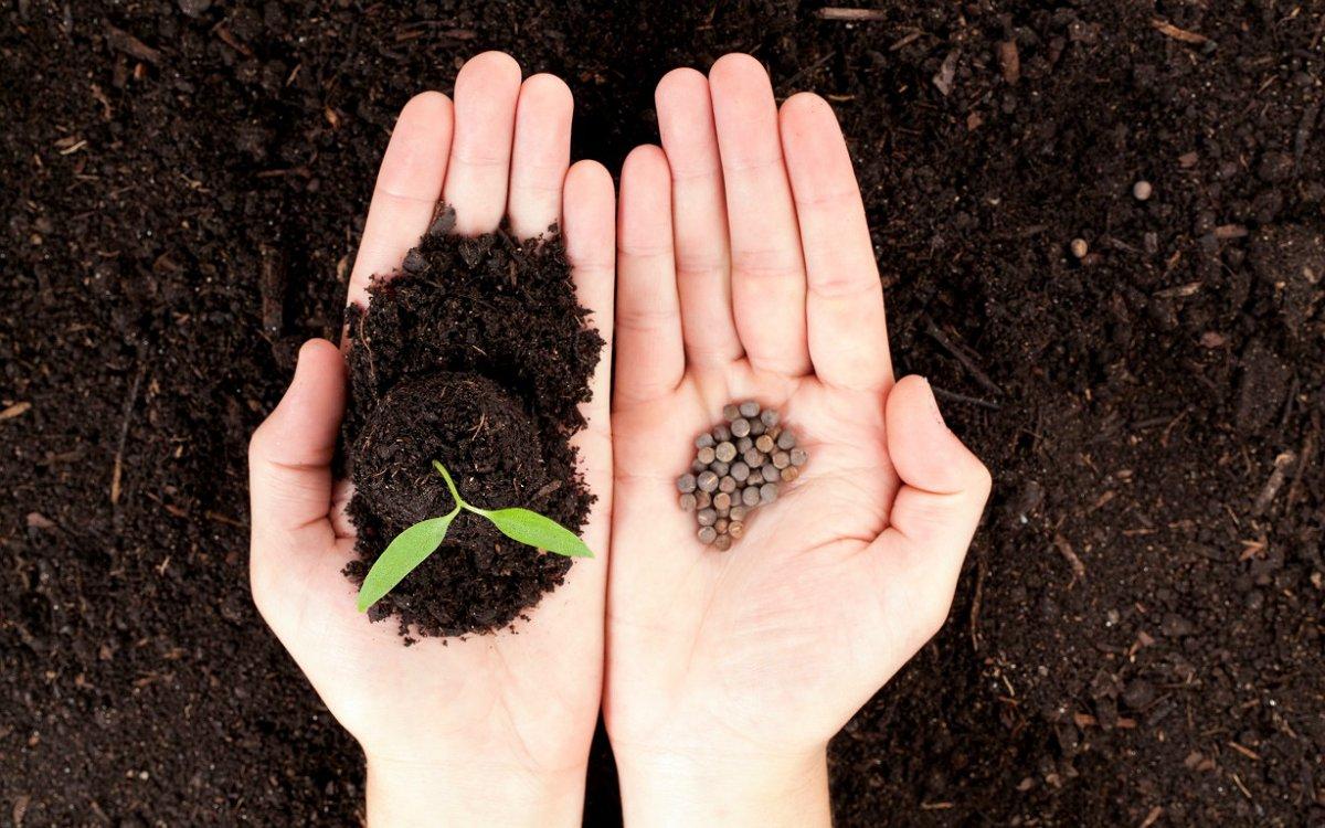 Как сажать мелкие семена 58