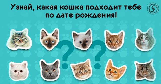Узнай, какая кошка подходит тебе по дате рождения