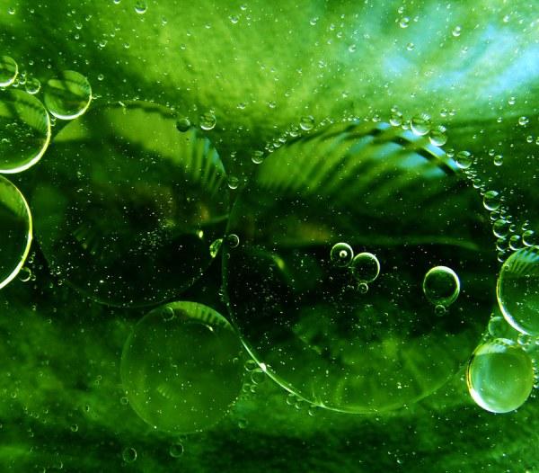 Необыкновенные макро фотографии Пола Квинна