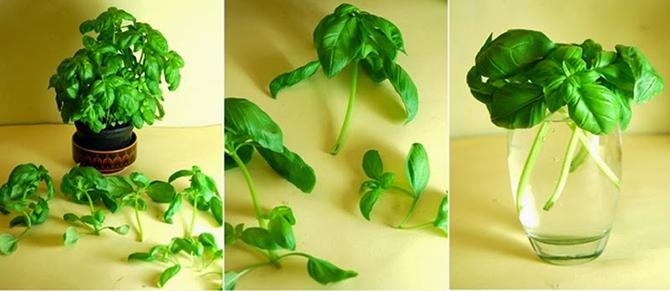 8 овощей, которые можно купить один раз, а потом выращивать всегда