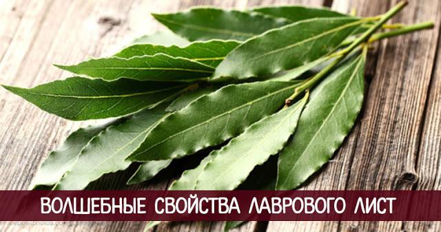 Волшебные свойства лаврового лист